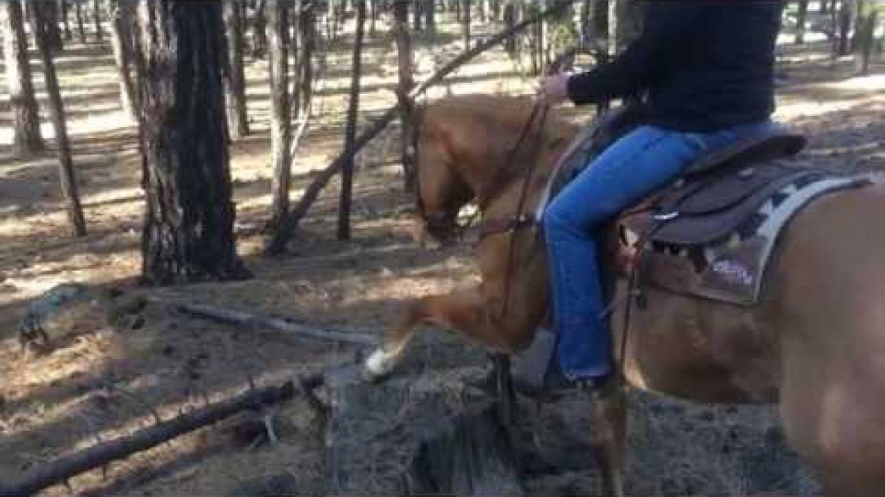 Horseback riding with elk in Flagstaff, Arizona